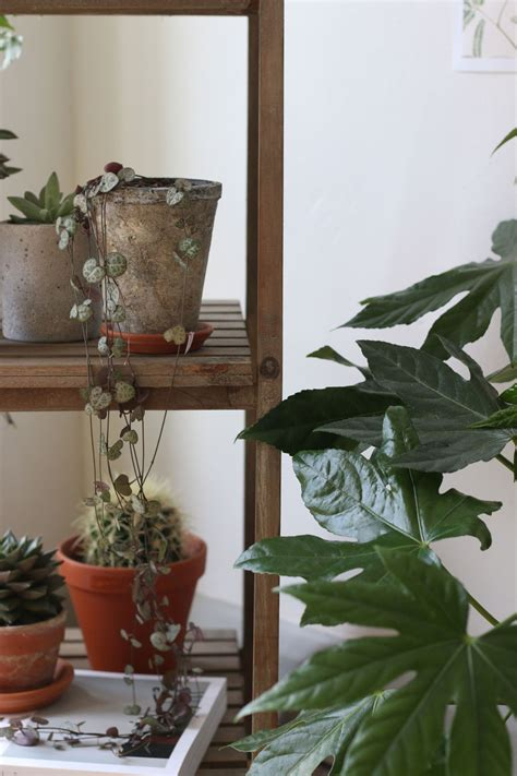 indoor plant display living with plants display lobster and swan