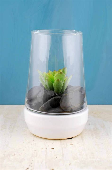 Terrarium Vases by Ottawa Terrarium With Ceramic Base 5 5 Quot X 8 25 Quot