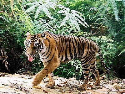 Kartu Telepon Indonesia Wwf World Wildlife Fund take join our activist network world wildlife fund
