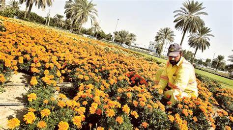 florist jobs in dubai dubai municipality to give away over 500 000 flower plants