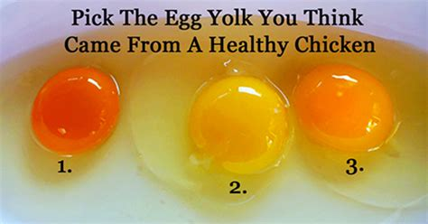 which egg is actually healthy according to yolk color