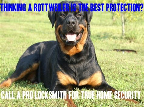 rottweiler meme rottweiler home security meme northern locksmith