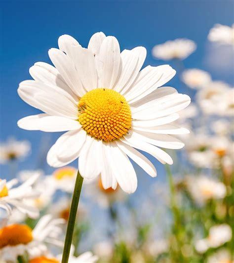 kosa kata bahasa inggris tentang bunga english cafe bali