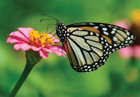 imagenes de mariposas naturaleza 1000 images about butterflies are free to fly fly away