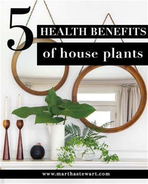 benefits of house plants 5 reasons houseplants are good for you mantels home and