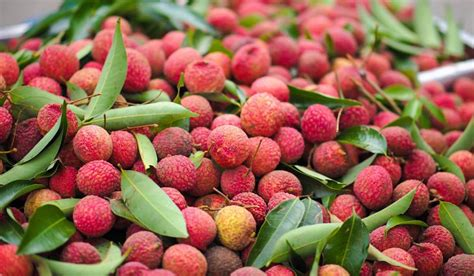 All About Lychees by Top Lychee Producing Countries In The World Worldatlas