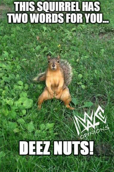 Squirrel Nuts Meme - 50 top squirrel meme joke images and pictures quotesbae