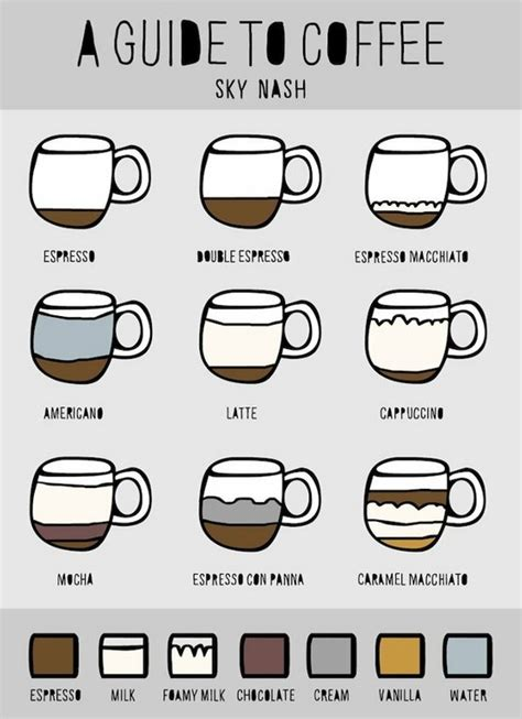 A Visual Guide to Coffee   Daily Infographic