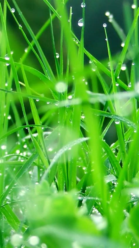 wallpaper samsung green 20 best wallpaper hd images on pinterest wallpaper