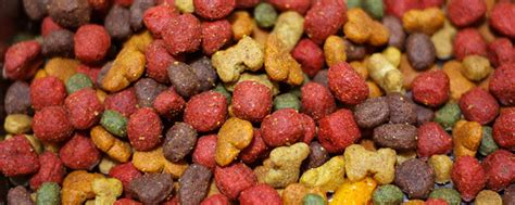 when do you stop feeding puppy food is your suffering from a food allergy chompers