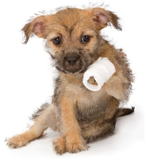 paw bandage aid kit 14 must items in a k9 emergency kit