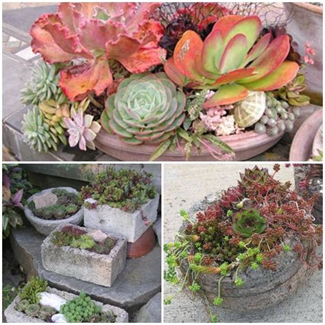 how to grow succulents in containers pictures photos and