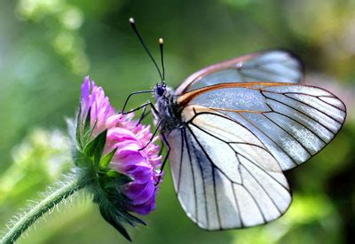 butterfly gardening plants design  tips planet natural