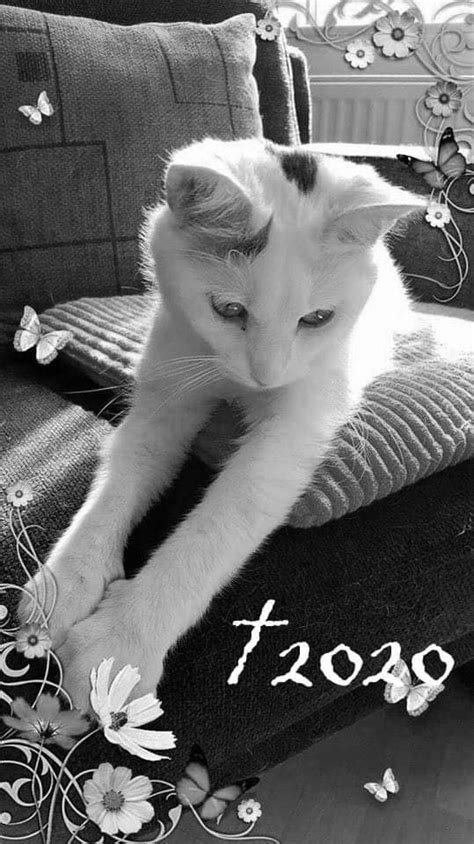 Katzenfan Seite - Ramona Jahn schreibt: Liebes Team