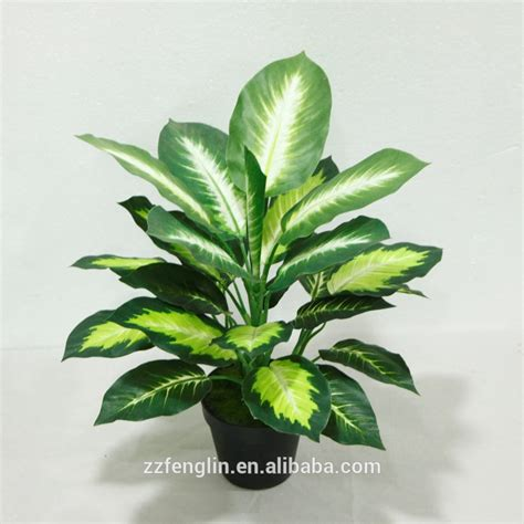 decorative indoor plants cheap wholesale outdoor indoor decorative potted plant