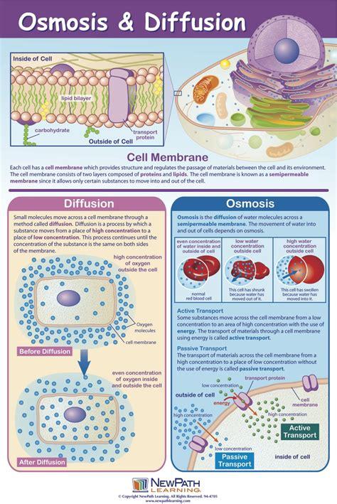 diffusion  osmosis mastering biology quiz
