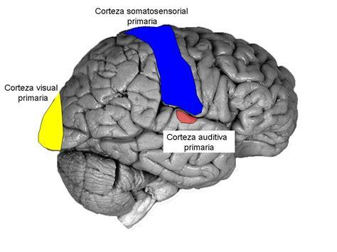 imagenes visuales sinestesia enero 2009 la caja de las caricias