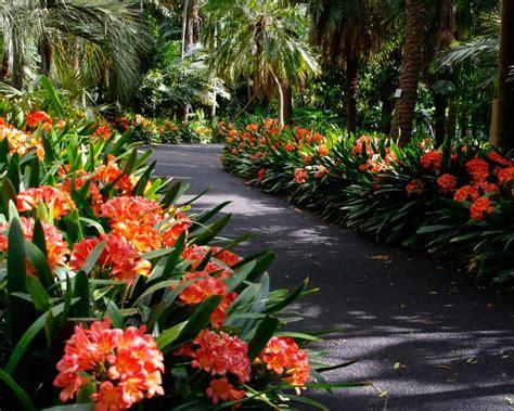 flower garden sydney flower garden sydney coffs harbour garden club garden