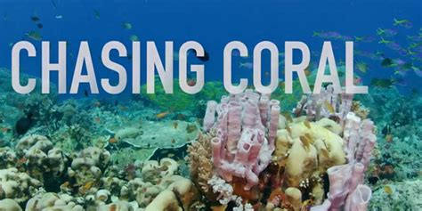 Watch Chasing Coral 2017 Watch Chasing Coral 2017 Online Free Full Movie Android Ios Iphone Ipad Gaga Com