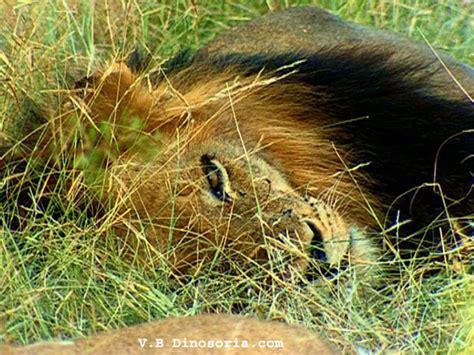 Animal Bon Dormeur by Le Site Des Animaux