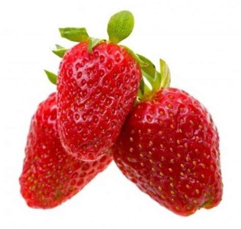 Bibit Strawberry bibit strawberry alexandria