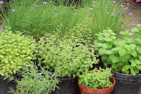 planting pots for sale creating a thriving herb garden right time to buy