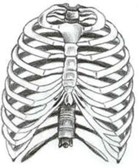 ossa della gabbia toracica scribaepub guida ufficiale di scribaepub