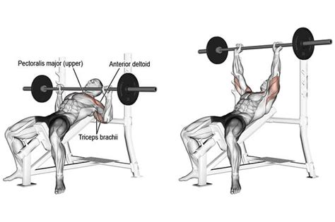 clavicle pain bench press boost your upper body strength with incline bench press