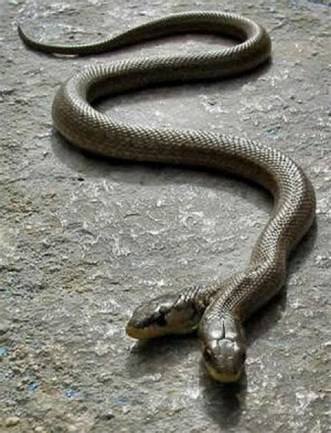 Time To Be A Real Snake by And I Think To Myself What A Wonderful World