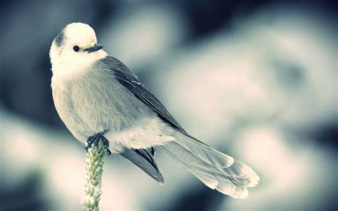 grey wallpaper with birds on gray bird wallpaper 10002