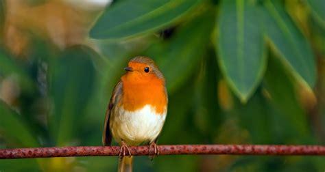 especies de pajaros silvestres pajaros de nuestros cos otro lado del turismo en m 233 xico 191 por qu 233 migran las aves