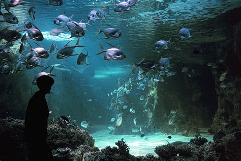 Lu Aquarium Malaysia the aquariums of australia travel article at expatify
