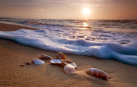 wallpaper sand sea beach shore shell summer beach