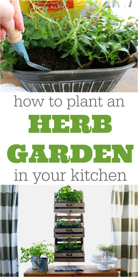 how to plant a kitchen herb garden