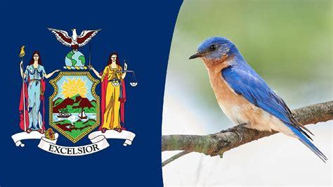usa state bird new york eastern bluebird youtube