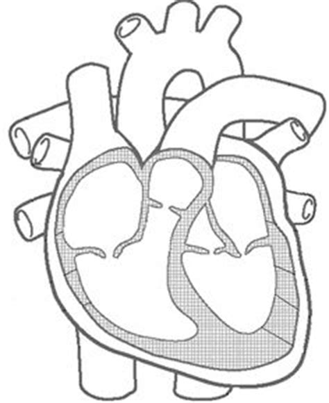 images  heart anatomy  physiology worksheets heart diagram blood flow worksheet