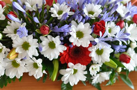 immagine mazzo di fiori foto gratis mazzo di fiori fiori fiore rosso