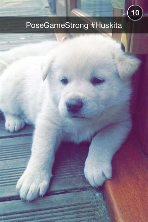 huskita puppies for sale huskita puppies for sale 2boys 2girls left pudsey west pets4homes