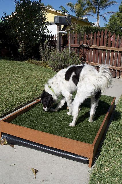 Dog Grass For Patio by Diy Dog Patio Potty That Drains For Cleaning Perfect