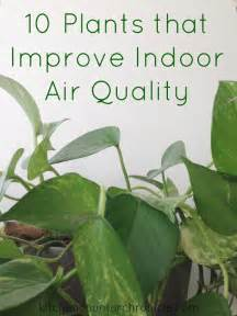 best houseplants for air quality 10 plants that improve indoor air quality