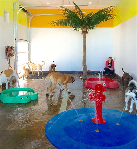 creature comforts pet resort indoor splash park for dogs angola hamburg buffalo