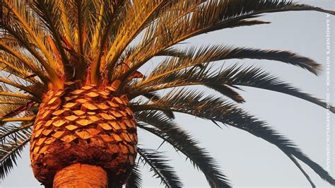Palm Tree Wallpaper by Palm Tree Desktop Wallpapers Wallpaper Cave