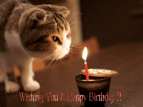 Cat Wishing Happy Birthday Birthday Wishes With Cats Page 2