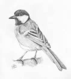 pencil drawings pencil drawings of birds