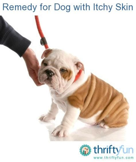 itch relief for dogs remedies for with itchy skin thriftyfun