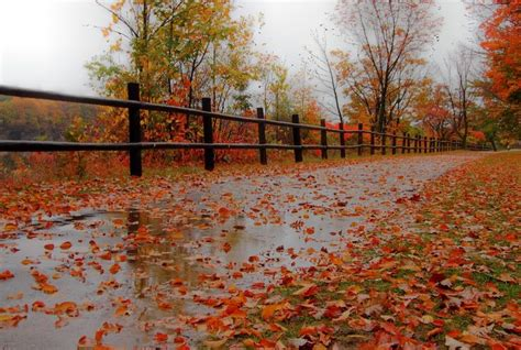 days of the fall a reporterâ s journey in the syria and iraq wars books rainy day pictures of fall rainy fall day i went out on