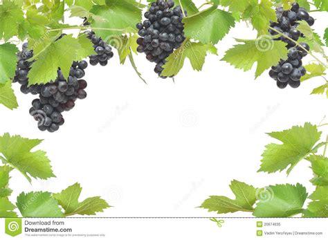 grapevine border clipart clipart suggest