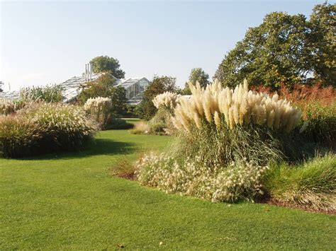 grass garden at kew 169 david hawgood cc by sa 2 0 geograph britain and ireland