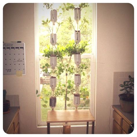 Small Window Plants 17 Best Images About Indoor Tomatoes On