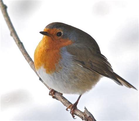 8 best robin bird costume ideas images on pinterest